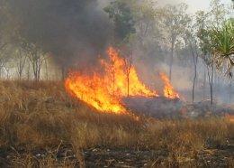 Bushfire insurance claims