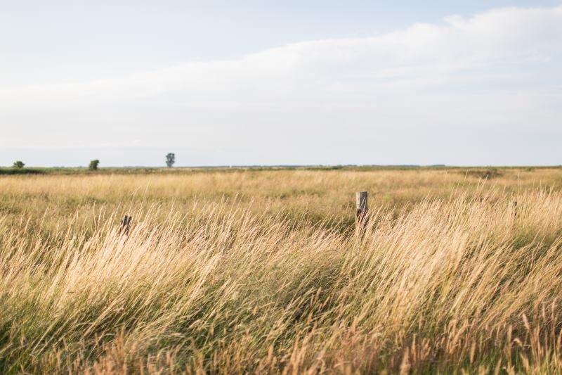 barren-farm-grass