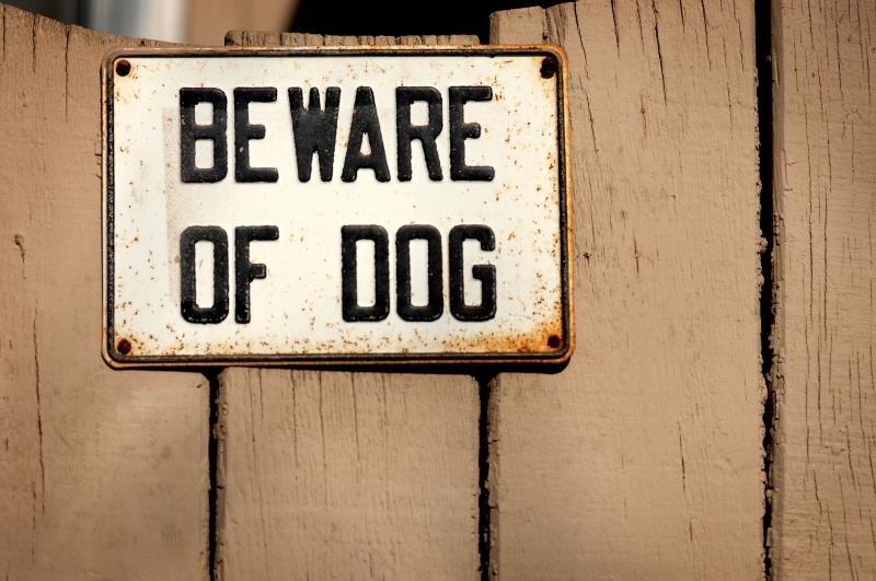 beware-dog