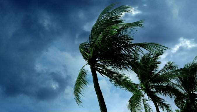 palm-tree-stormy