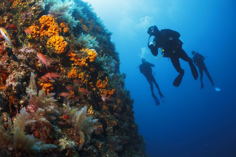 scuba-divers-with-reef